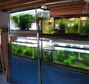 Setting Up A Fishroom